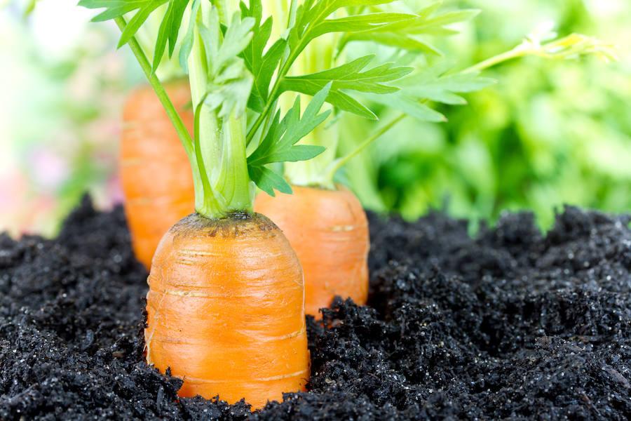 Las zanahorias aumentan el atractivo masculino