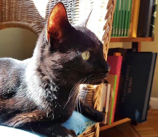 rusia-the-cat