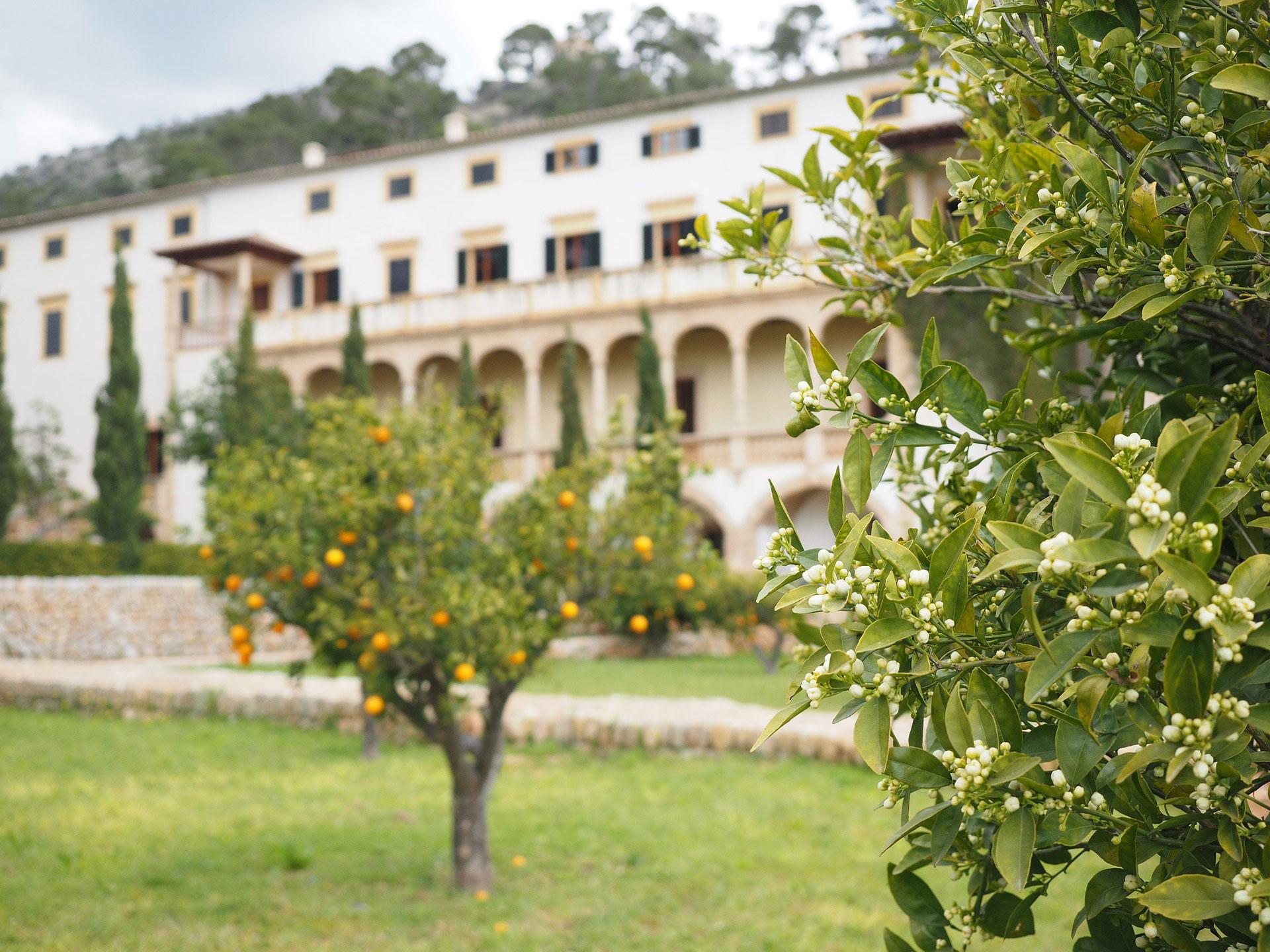 arbol-perfumista-naranjo2